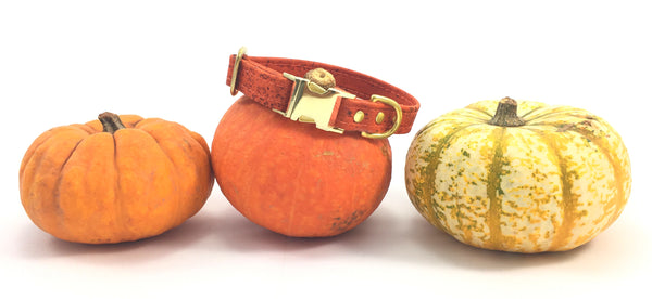 Orange vegan cork leather Halloween dog collar with pumpkins