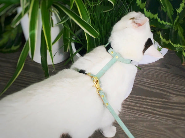 Luxury cat harness and leash in luxury green vegan cork 'leather' for using outside in the garden, made in the UK by Noggins & Binkles