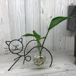 Hydroponic Home Décor - Cat
