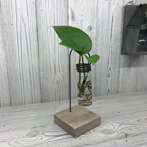 Hydroponic Home Décor - One Lab Pot