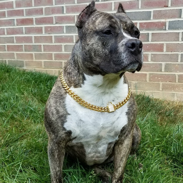 gold cuban link dog collar rhinestone