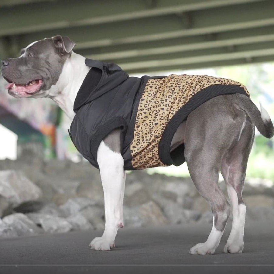 pitbull dog coat