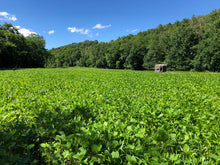 Load image into Gallery viewer, Stratton Seed Forage Soybean Food plot