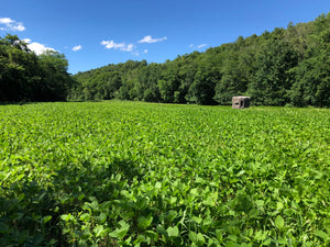 Stratton Seed Forage Soybean Food plot