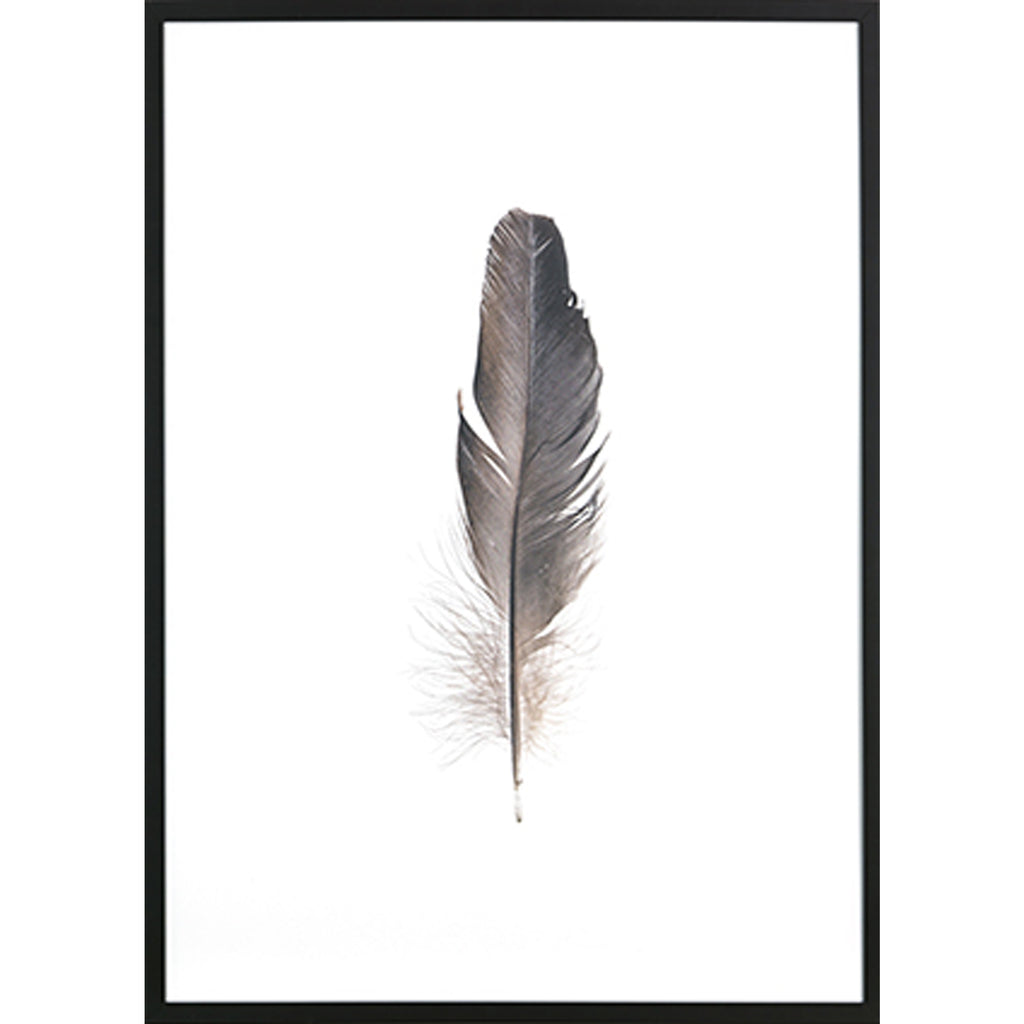 Bild | Feather - Farbfotografie