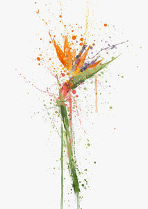 Bird Of Paradise Wall Art Print-We Love Prints