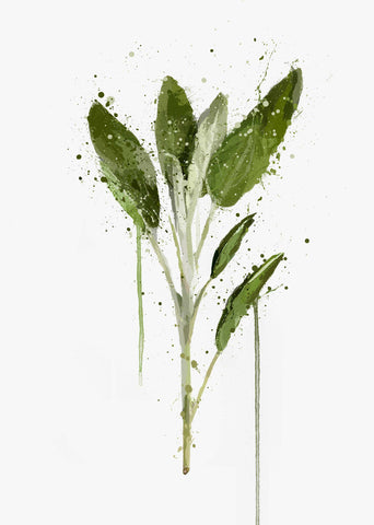Herb Wall Art Print 'Sage'