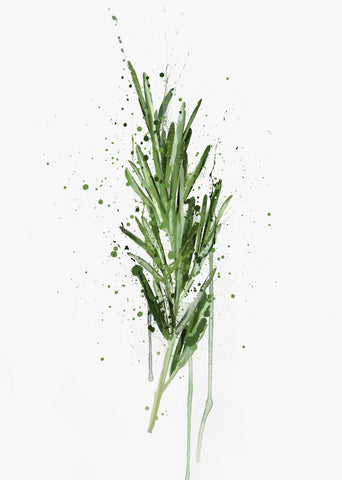 Herb Wall Art Print 'Rosemary'