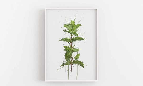 Herb Wall Art Print 'Mint'