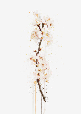 Flower Wall Art Print 'White Cherry Blossom'