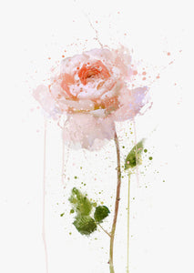 Flower Wall Art Print 'English Rose'