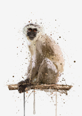 Monkey Wall Art Print 'Vervet'