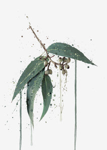 Botanical Wall Art Print 'Eucalyptus'