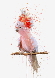 Cockatoo Wall Art Print 'Pink Majesty'