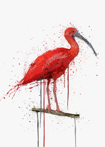 Scarlet Ibis Bird Wall Art Print