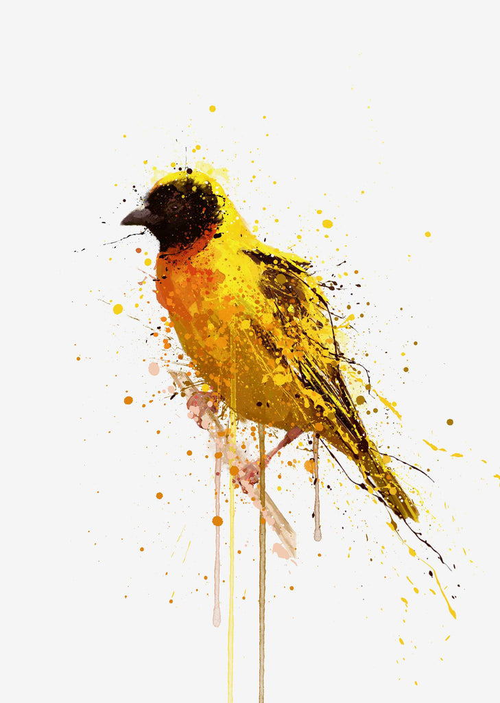 Yellow-Backed Weaver Bird Wall Art Print