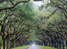 Load image into Gallery viewer, Live Oak Lane Puzzle