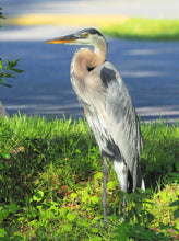 Load image into Gallery viewer, Blue Heron Puzzle