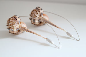 Fusinus Colus dangles. Sterling silver earrings with natural Fusinus Colus.