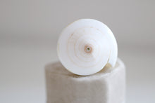 Sea snail ring. Natural Sea snail converted as a ring.