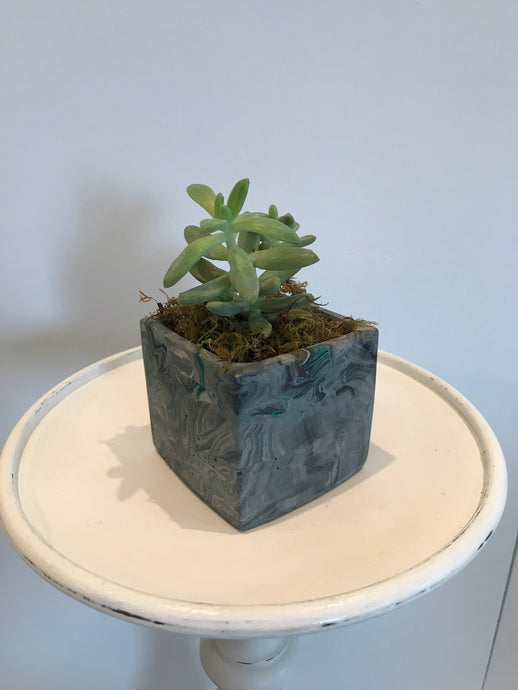 Small Square Concrete Pot Turquoise
