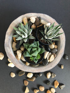 Cement & Glass Terrarium
