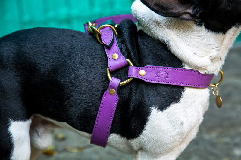 Lavender Purple Leather Dog Harness