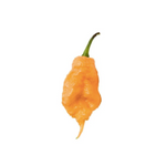 Culley's Fresh Chilli Plant Peach Carolina Reaper