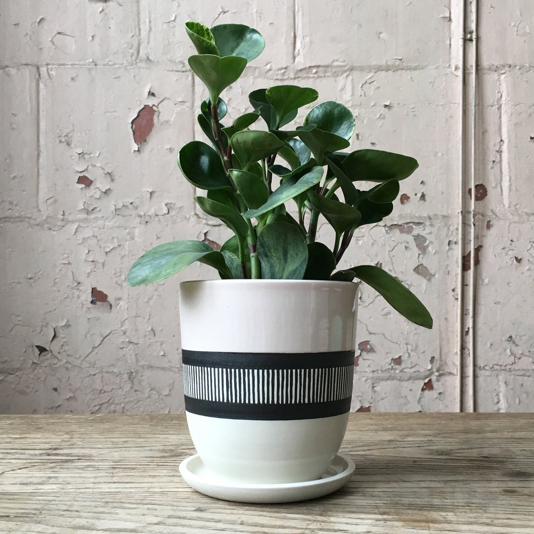 Center Stripes Planter with Drain Hole and Dish