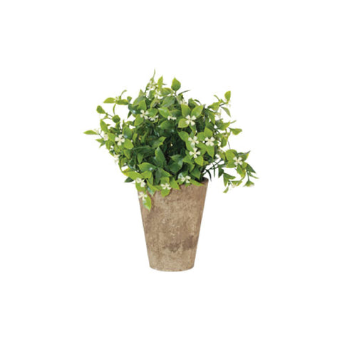 POTTED JASMIN