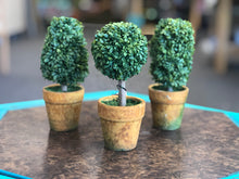 Topiary in Pot