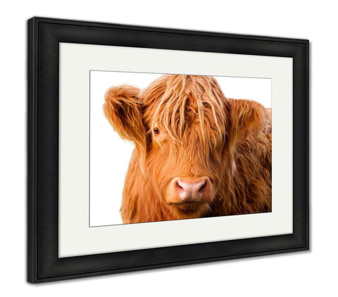 Framed Print, Wild Redhaired Calf Of Highland