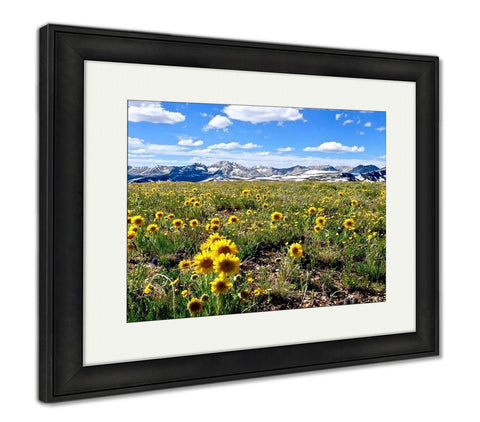 Framed Print, Yellow Flowers In Alpine Meadows And Snowy Mountains On Independence Pass Aspen