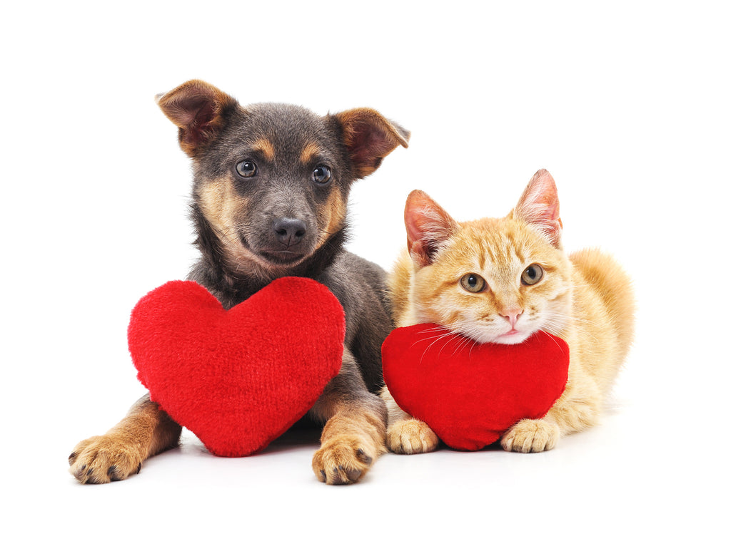 Show Your Pet Some Love
