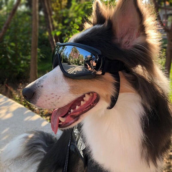 Adjustable Windproof Pet Dog Sunglasses