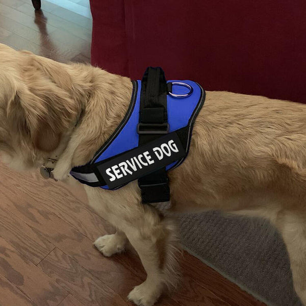 Personalized Reflective Pet Dog Harness