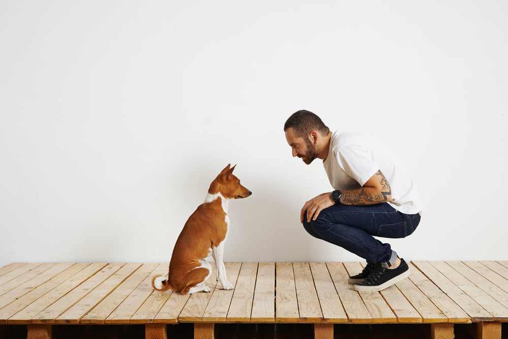 April: Speaking Dog - 5 ways to show your dog you love him