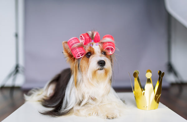 Dog Hair Curlers