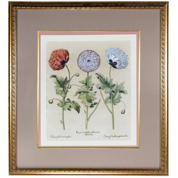 Basilius Besler Botanical Hand-Colored Engraving of Poppies