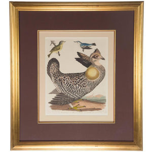 Ornithological Hand-Painted Alexander Wilson Engraving