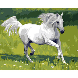 DIY Paint By Numbers White horse Running Painting Kit Paint By Numbers Calming Paints