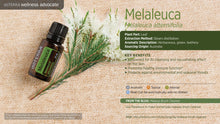 Melaleuca (Tea Tree)