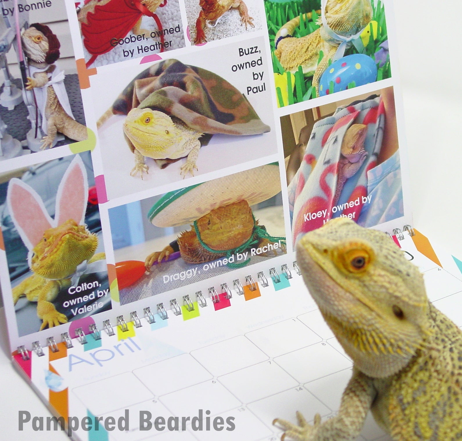 Now taking Pre-Orders through Dec 10th for our 2020 Pampered Beardies Calendar!