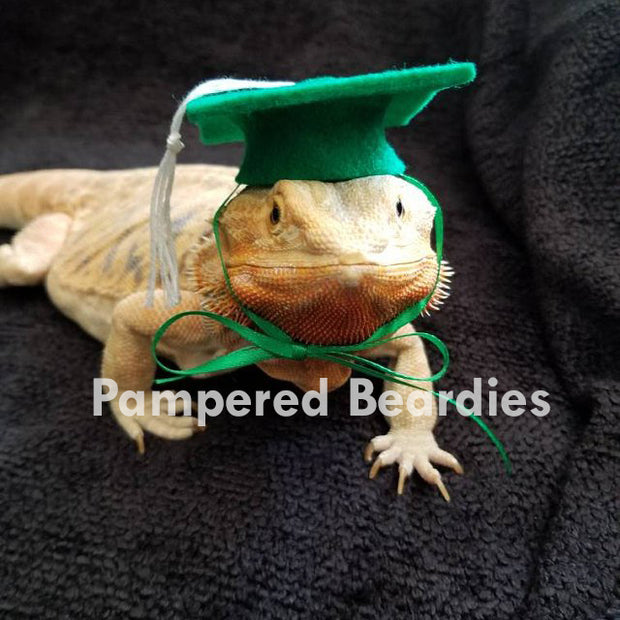 Graduation Hat (Mortarboard) or Gown