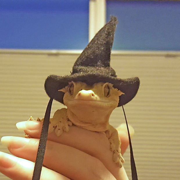 Witch Hat in 3 sizes or Witch Cape