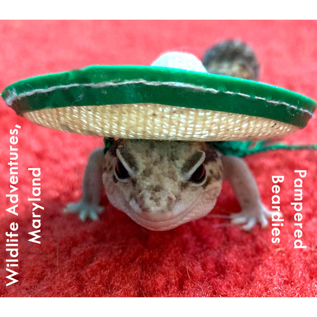 Mexican Sombrero, 3 sizes