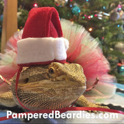 Santa Hat and Beard for Bearded Dragons, Reptiles and Small Animals!