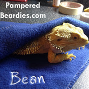 Personalized Blankies for Bearded Dragons, Reptiles, & Small Pets!  Multiple color choices!!