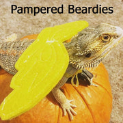 Wings for Bearded Dragons, Reptiles, and Small Animals! Multiple colors.