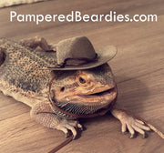 Cowboy Hats for your Bearded Dragon, Snakes, & Small Pets! Multiple sizes, three colors.